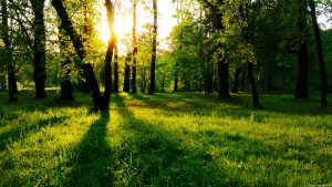 wall-1372536299_sun-in-forest