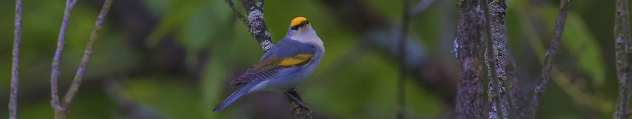 Eastern Ontario Birding